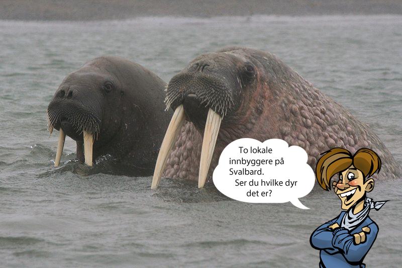 Svalbard2b