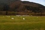 Grasmarker i Midt-Norge.